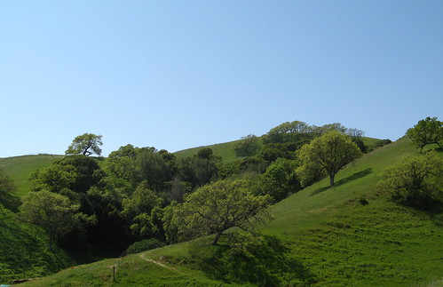 Green Hills of Briones