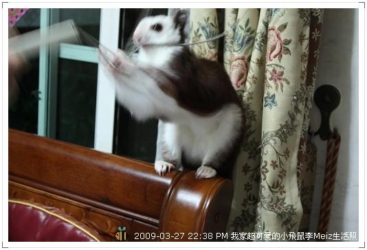 09年二三月小飛鼠Meiz生活照 (30)
