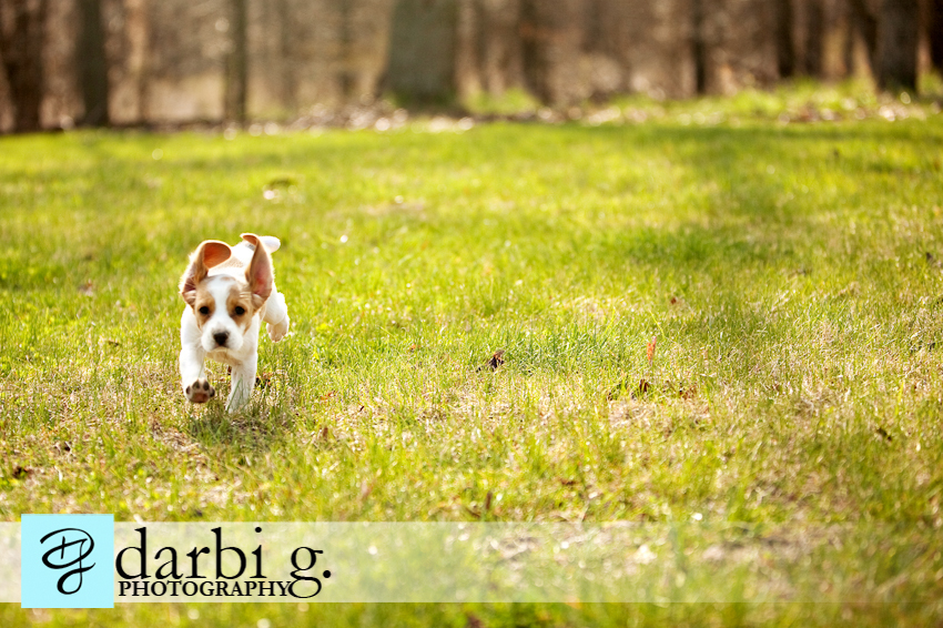 Darbi G photography-dog puppy photographer-_MG_9774-Edit