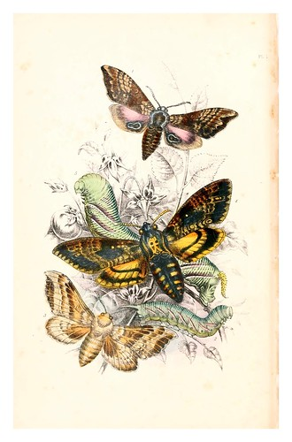 mariposa13