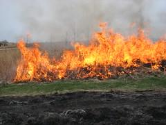 IMG_2996 (The Brenton Arboretum) Tags: fire arboretum prarie brenton