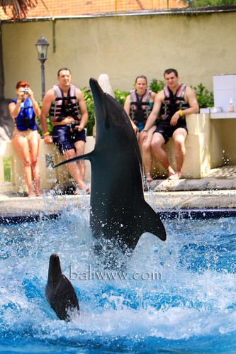 Dolphin and Wild Life Resort -  Melka Excelsior Hotel