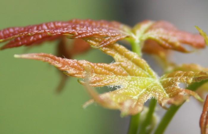 04-28-leaf