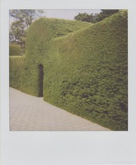 the secret garden (jayejaye) Tags: film polaroid australia 600 hedge adelaide southaustralia barossavalley instantfilm henschke roidweek roidweek09