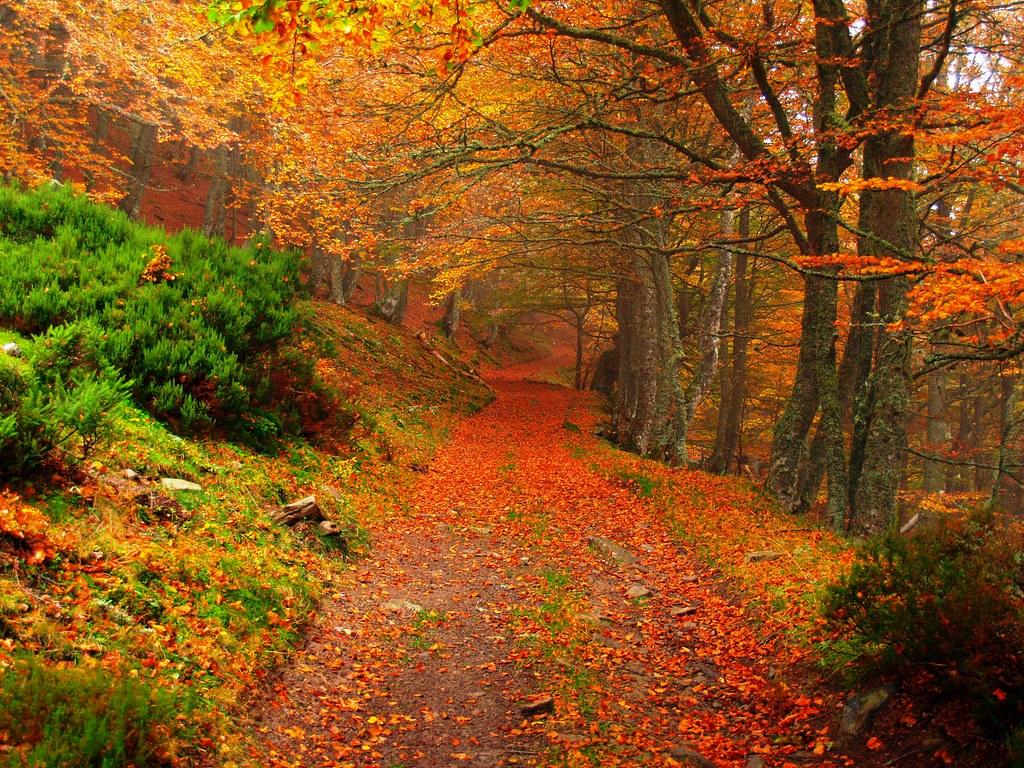 En otoño por aller