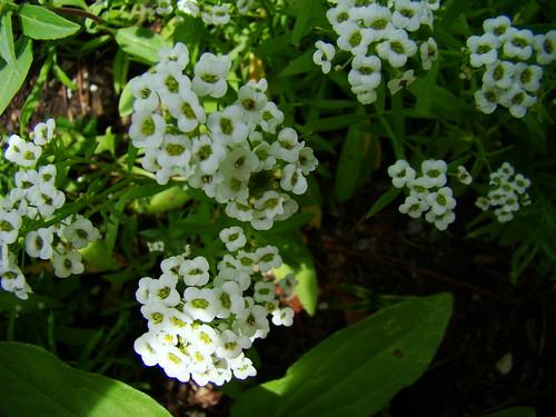 Wildflower 2 5 24-09