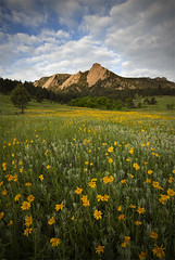 Field of Gold (Lightvision []) Tags: flowers wild summer mountain tourism nature field clouds sunrise landscape spring colorado flat denver boulder sunflowers co flatirons irons chautauqua sigma1020mm canonxsi