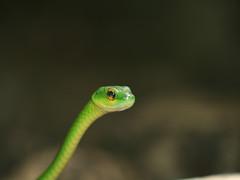 Snake, Posing