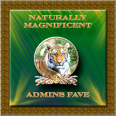 Naturally Magnificent Admin Choice award