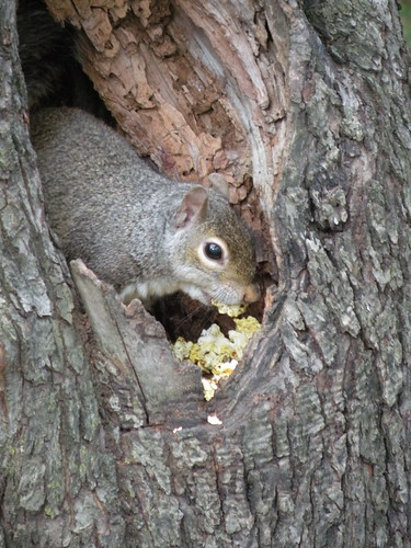 squirrel loves popcorns