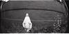 (m. wriston) Tags: camera city blackandwhite bw usa white black film church analog 35mm lens toy lomo lomography weeds mary maryland baltimore fisheye plastic diana diafine 20mm hampden vigin selfdeveloped autaut