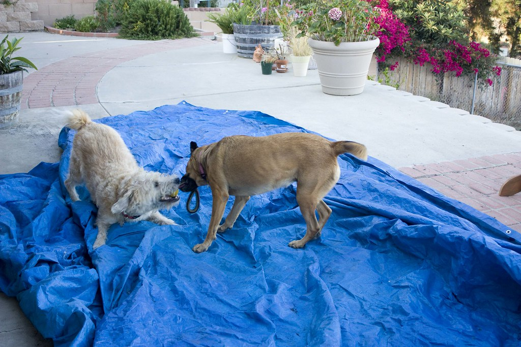 while I try to fold a large tarp