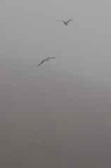 Ghosts (SkyReiter) Tags: california seagulls beach birds fog hiking marin tennesseevalley 3502
