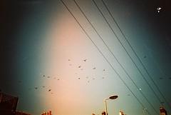 Birds flighing South (Urbexthis) Tags: blue sky sun white black film birds clouds 35mm grey sussex brighton kodak pigeon telephone olympus xa2 lampost olympusxa2 eastsussex telephonewires flighing bekahpalmer