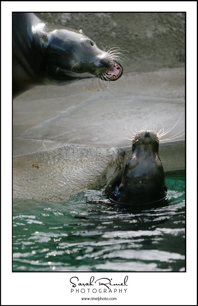 feb zoo 39