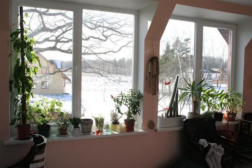 Plants on my window