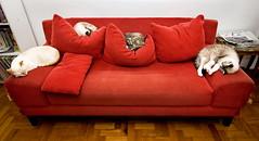 Sof-Cama [Sofa-Bed] (Jim Skea) Tags: gatos nunki pim pandora mizu sof sofa couch cama bed nikond50 sigma1020mmf456exdchsm speedlightsb600 sb600 quatro four