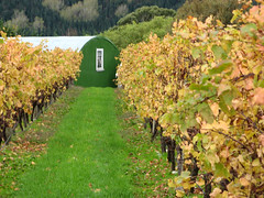 Wairarapa Vineyard