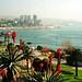 Vina - Chile Study Abroad