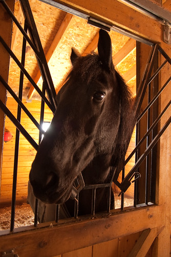 Levaland Farm stabled horse