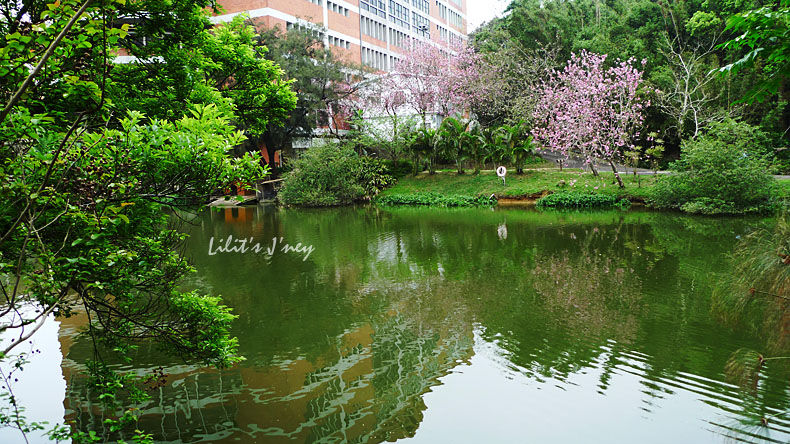 20090328_中華鴨子湖