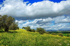 Cyprus in Spring (Andrew Deko) Tags: clouds landscape countryside spring mediterranean olive cyprus hdr larnaka