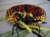 almost done (Dasssa) Tags: paper origami strip modular torus knotology
