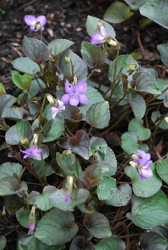 Spring Garden (4)