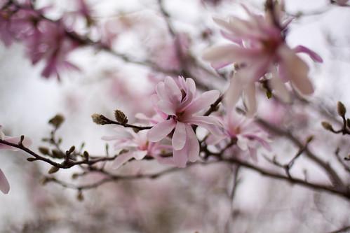 Lotsa Pink