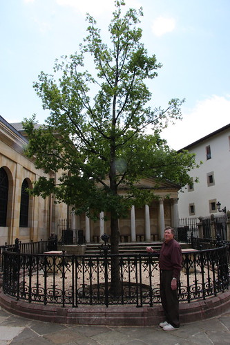 Guernica's New Oak Tree