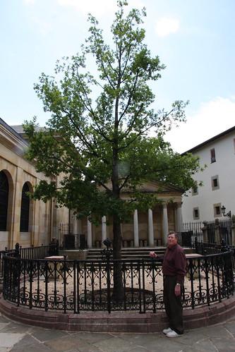 Guernica's New Oak Tree