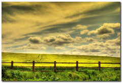 Are you going my way? (Martyn Starkey) Tags: sky field yellow clouds fence photography tracks seed rape soe starkey martyn mywinners abigfave anawesomeshot vosplusbellesphotos saariysqualitypictures