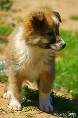 Sweet dog (kezwan) Tags: dog sweet kezwan 1on1pets 1on1petsphotooftheweek 1on1petsphotooftheweekjuly2009