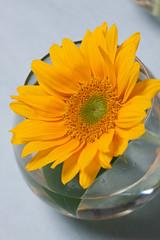 0908 flowers #8