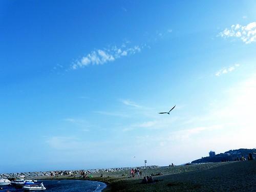 Gavià volant sobre la platja de Sant Antoni de Calonge