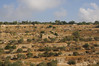 Terraces around Jerusalem