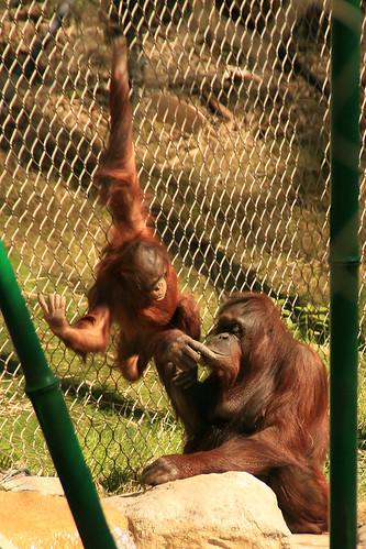 Berani Hangin' Out with Mom, Kalim