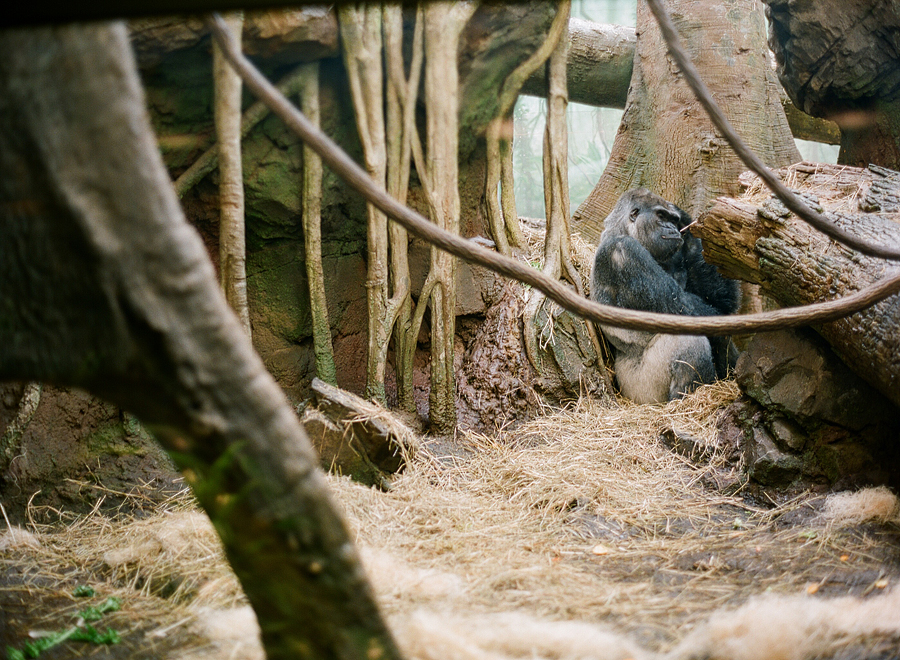 the bronx zoo (film!)