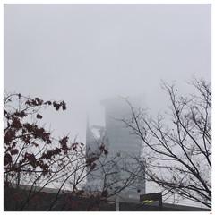 Foggy Day 090306 #03