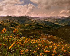~ So Many Mountains ~ (Peem (pattpoom)) Tags: flowers mountains flores fleurs landscape searchthebest blumen explore bunga fiori  blommor bloemen blomster bulaklak kwiaty hoa  blm iekler     kvtiny      blthanna  theperfectphotographer  vosplusbellesphotos nikkor1224mmf4gedifafs kukkien virgokat