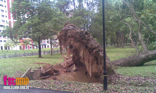 Fallen tree lies in potential mosquito breeding puddle
