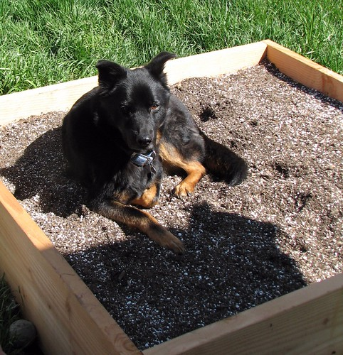 The Raised Bed is not A Dog Bed