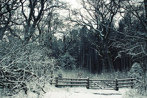 Ytene in snow 3