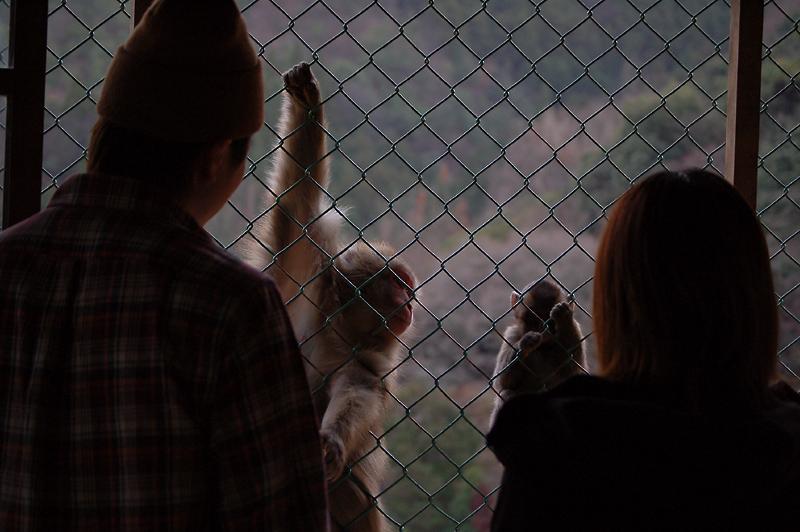 _monkey-15_