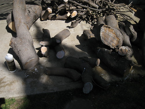 sealing logs and branches