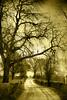 maienfeld (riisli) Tags: trees light beauty way mono soe maienfeld proudshopper awardtree