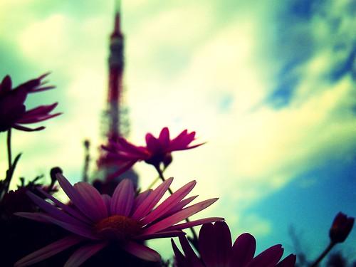 gerbera and tokyo tower towards sky