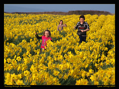 Running through the daffodils (faye_rae) Tags: sunset smiling yellow children fun spring running fields bulbs daffodils
