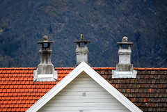 Ikke mindre enn tre - No less than three (erlingsi) Tags: roof geometric contrast norge pipes noruega oc kontrast tak volda noorwegen noreg erlingsi erlingsivertsen takstein geometriccomposition voldabackstage skorsteiner ikulissne ikulissene