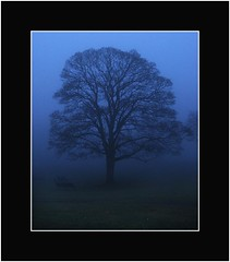 Mist Shrouded  Tree and Benches - Camperdown Park - Dundee - Scotland (Magdalen Green Photography) Tags: trees scotland cool moody dundee scottish tayside haar camperdownpark treeinmist mistshrouded dsc4370 iaingordon picturesofdundee treeandbenches dundeephotography imagesofdundee dundeestockphotography printsofdundee
